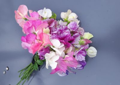 lathyrus plukbloemen