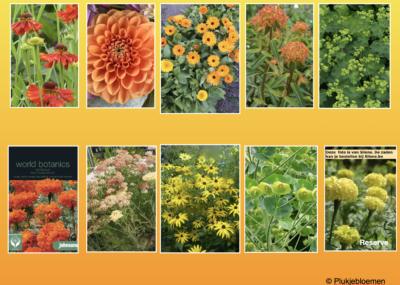 plukbloemen op kleur