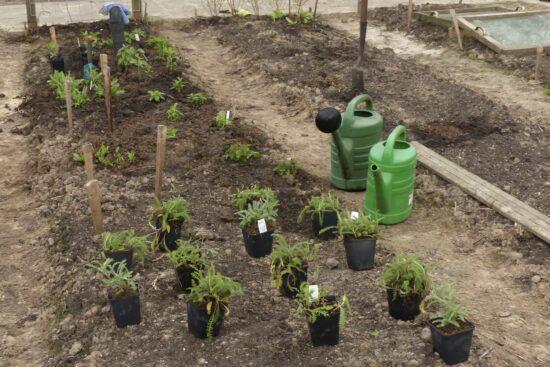 planten uitzetten pluktuin