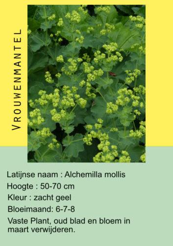 voorbeeld plantenkaartje